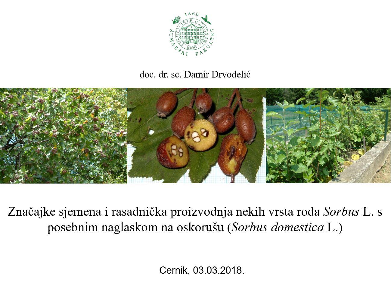 Značajke sjemena i rasadnička proizvodnja nekih vrsta roda Sorbus L. s posebnim naglaskom na oskorušu (Sorbus domestica L.)