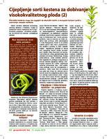 Cijepljenje sorti kestena za dobivanje visokokvalitetnog ploda (2)